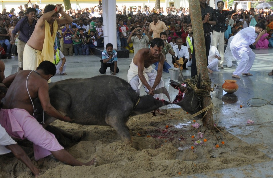 animal-sacrifice-by-hindus.jpg